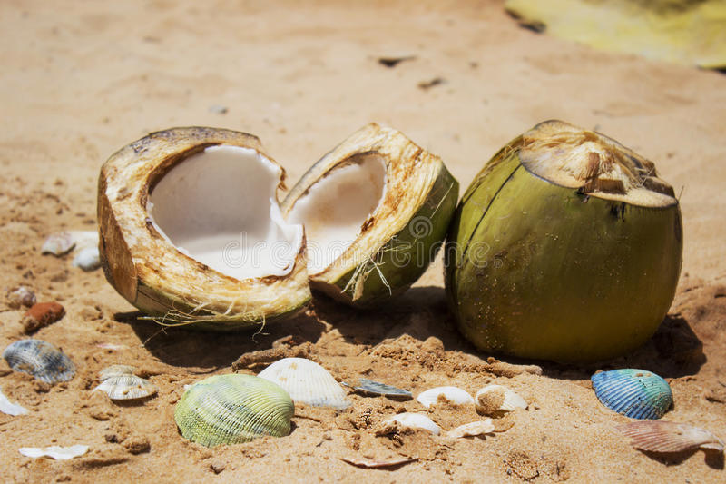 在沙子的椰子 图库摄影