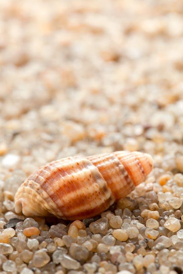 在沙子的海海扇壳 免版税库存照片