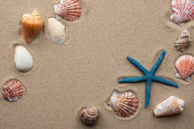 在沙子的海运壳 库存照片