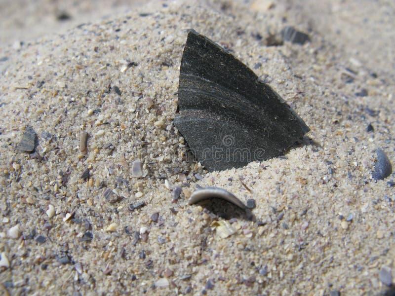 在沙子的淡菜壳 免版税图库摄影