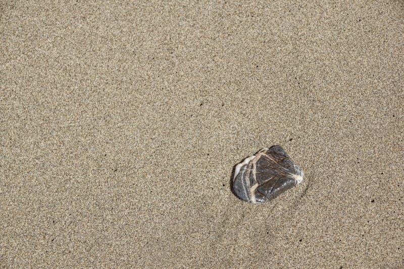 在沙子的石头在海滩,日出射击 免版税库存图片