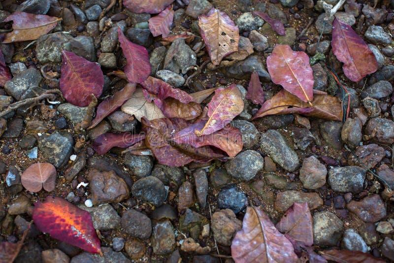 在沙子的纹理红色下落的叶子和石头向海 免版税库存照片
