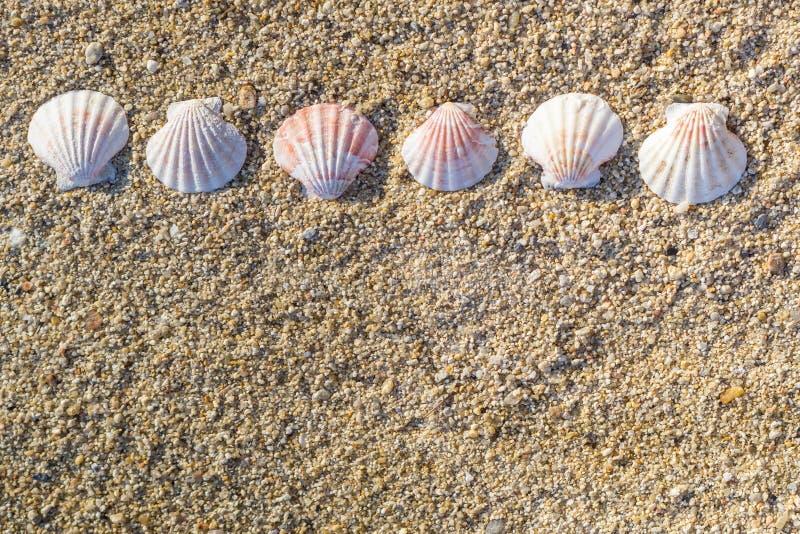 在沙子的线安排的壳 库存照片