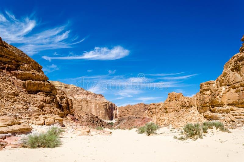 在沙子的绿色灌木在一个峡谷在反对山和一天空蔚蓝背景的沙漠与云彩在埃及宰海卜 库存图片