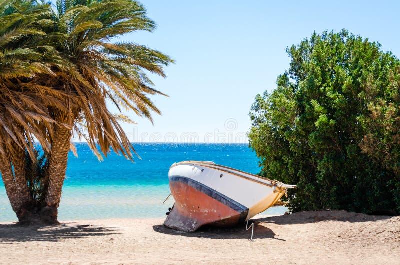 在沙子的老游艇在棕榈树和树中的岸在海的背景中在埃及宰海卜南西奈 图库摄影