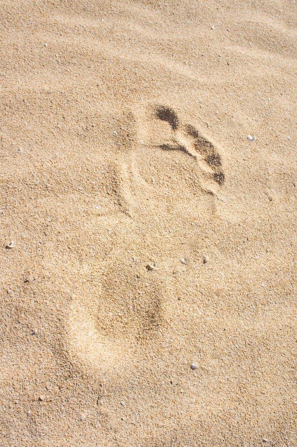 在沙子的脚印。沙丘,费埃特文图拉岛。 免版税库存照片