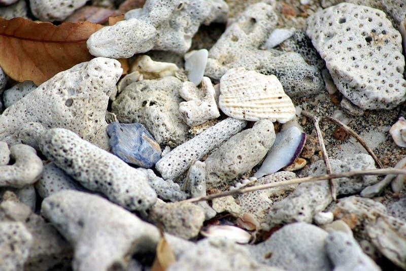 在沙子的被漂白的珊瑚 库存图片