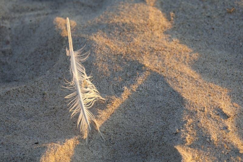在沙子的鸟羽毛 免版税库存照片