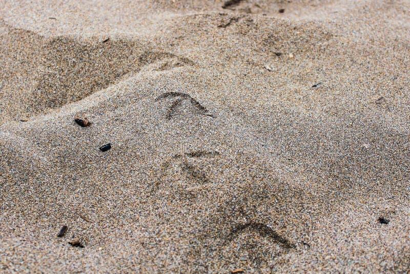 在沙子的鸟轨道 免版税库存照片