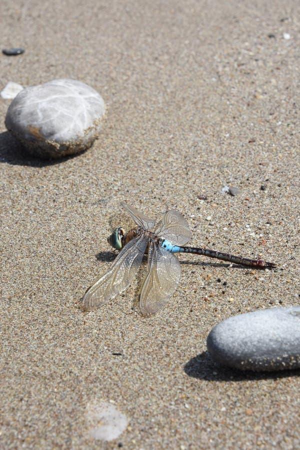 在沙子的蜻蜓 免版税库存照片