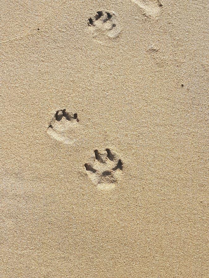 在沙子的Pawprints 免版税库存照片