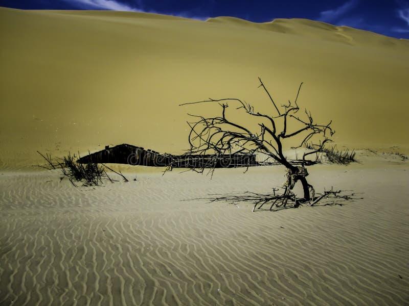 在沙子|纳米比亚沙漠下 库存图片