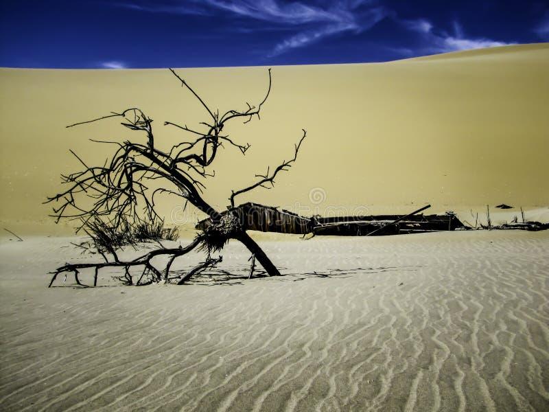 在沙子|纳米比亚沙漠下 免版税库存照片