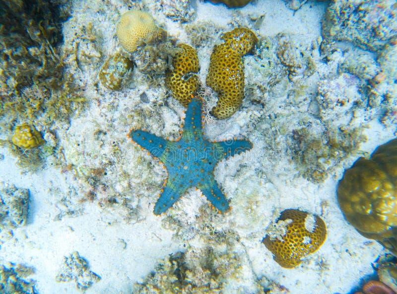 在沙子seabottom的海星 与星鱼的海里的风景 在狂放的自然的热带鱼 库存图片
