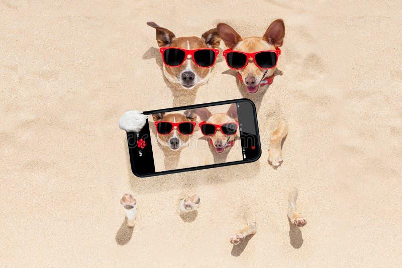 在沙子selfie埋没的狗夫妇  库存图片