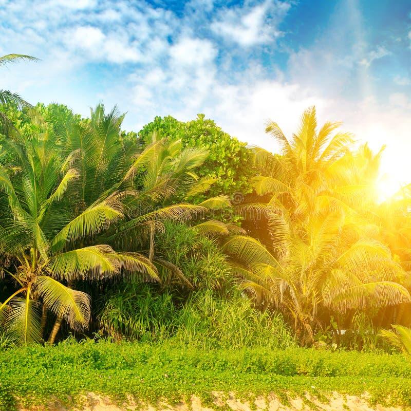 在沙滩和明亮的日出的热带棕榈 免版税库存照片