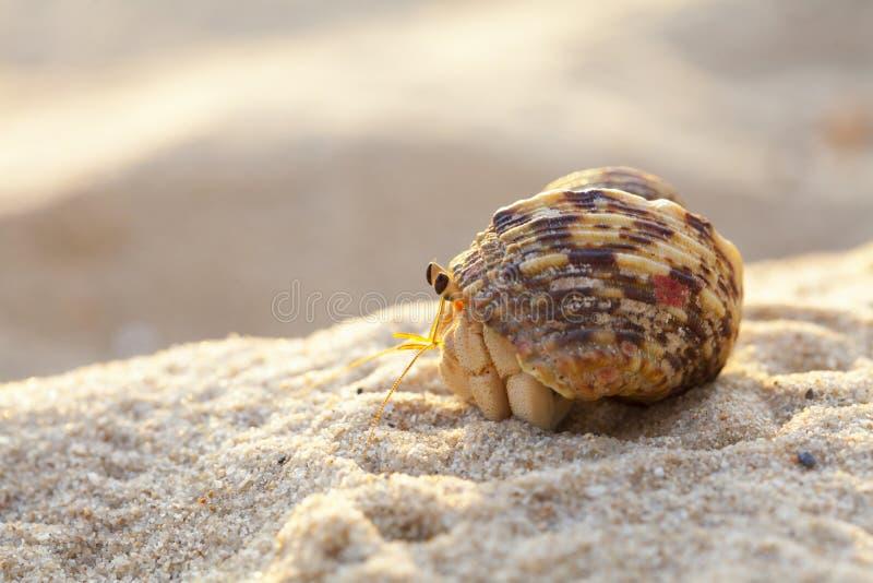 在沙滩特写镜头的寄居蟹 图库摄影