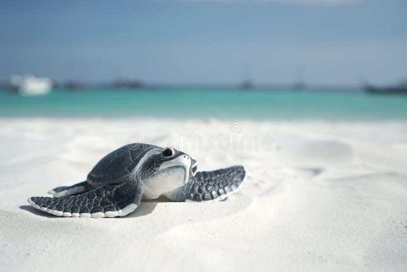在沙滩的一点海龟 免版税库存图片