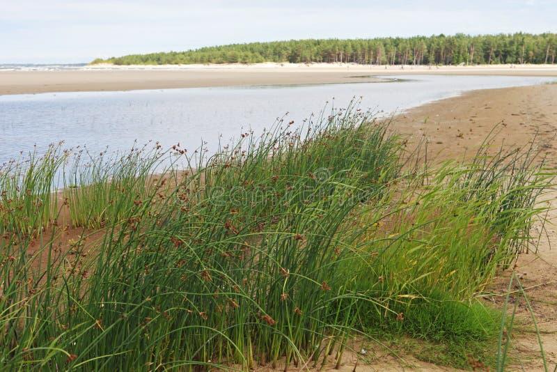 在沙滩的看法与绿草、盐水湖和森林灌木背景的 免版税库存图片