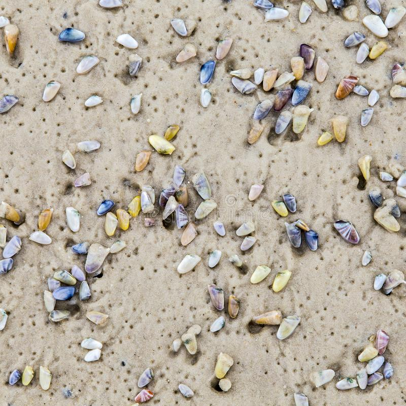 在沙滩的美好的壳 图库摄影