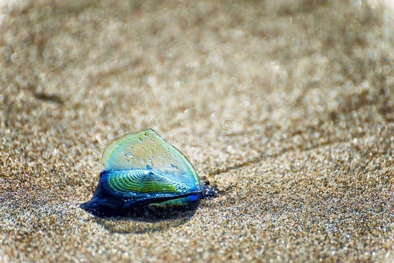 在沙滩的蓝色风帆松包 免版税图库摄影