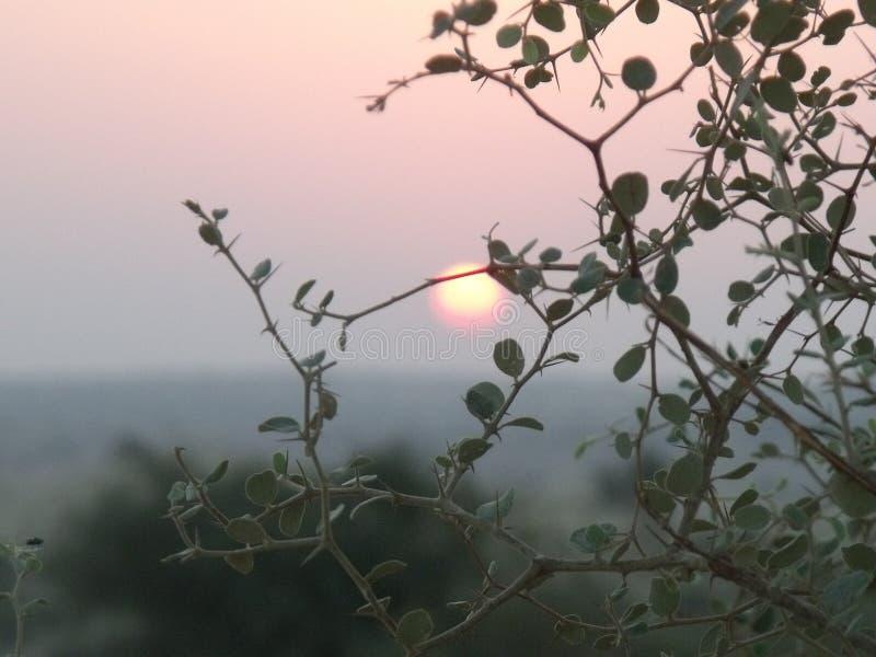 在沙漠植物后的太阳上升 库存图片