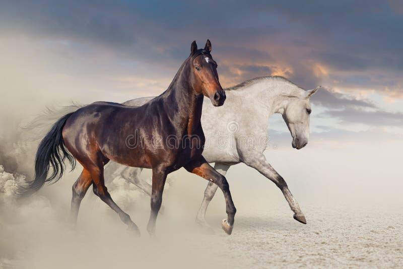 在沙漠沙子马跑的小组 免版税图库摄影