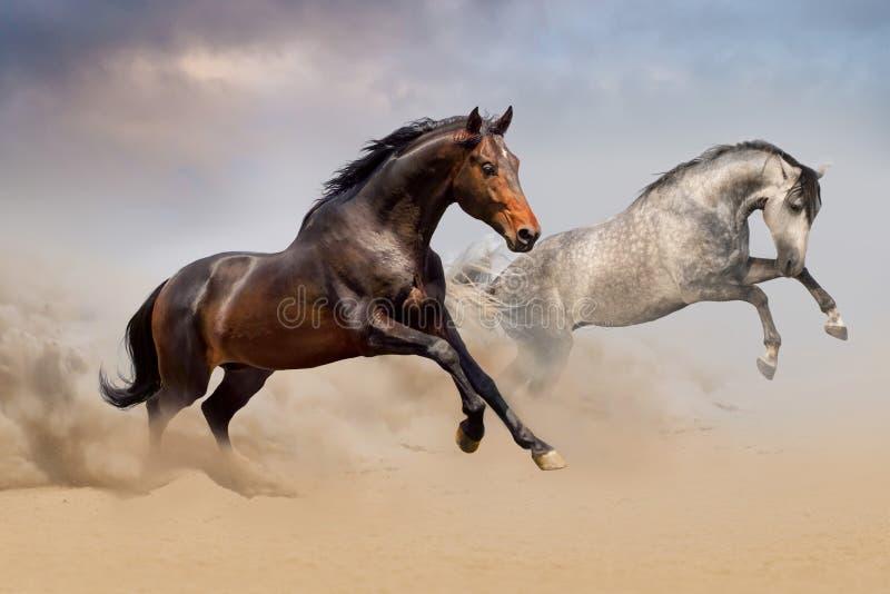 在沙漠跑的马夫妇 免版税库存照片