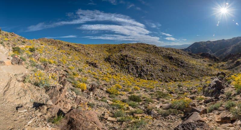 在沙漠绽放上破裂的明亮的太阳 免版税库存图片