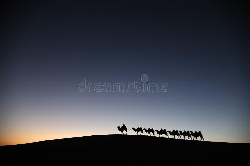 在沙漠黎明的骆驼有蓬卡车 库存图片