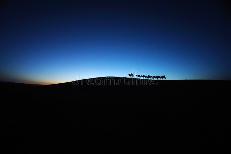 在沙漠黎明的骆驼有蓬卡车 免版税库存图片