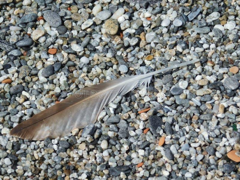 Download 在沙粒海滩的一根羽毛 库存照片. 图片 包括有 火箭筒, 沙粒, 海鸥, 本质, 双翼飞机, 详细资料, 室外 - 72360172