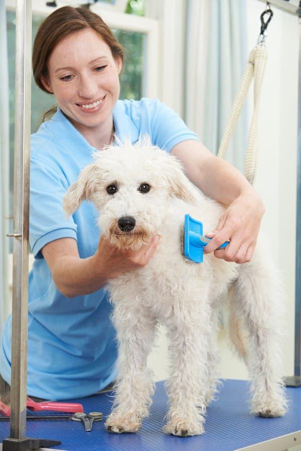 在沙龙专业地修饰的爱犬 库存图片