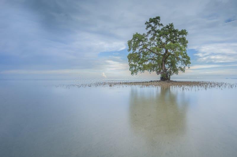 在沙巴婆罗洲海滩,马来西亚的一棵偏僻的树 免版税库存图片