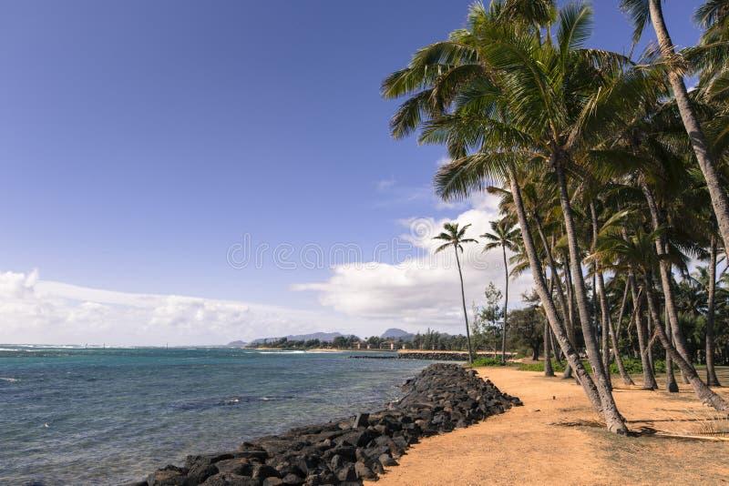 在沙滩的可可椰子树在Kapaa夏威夷,考艾岛 图库摄影
