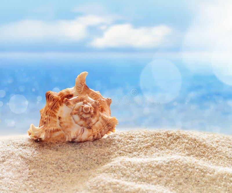 在沙滩的贝壳 免版税库存照片
