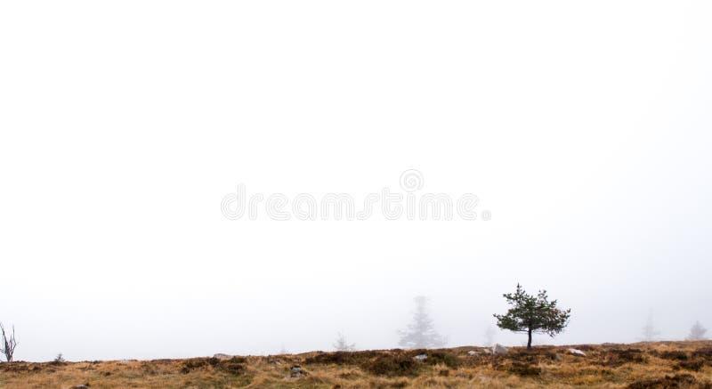 在没什么的边缘的偏僻的树 库存照片