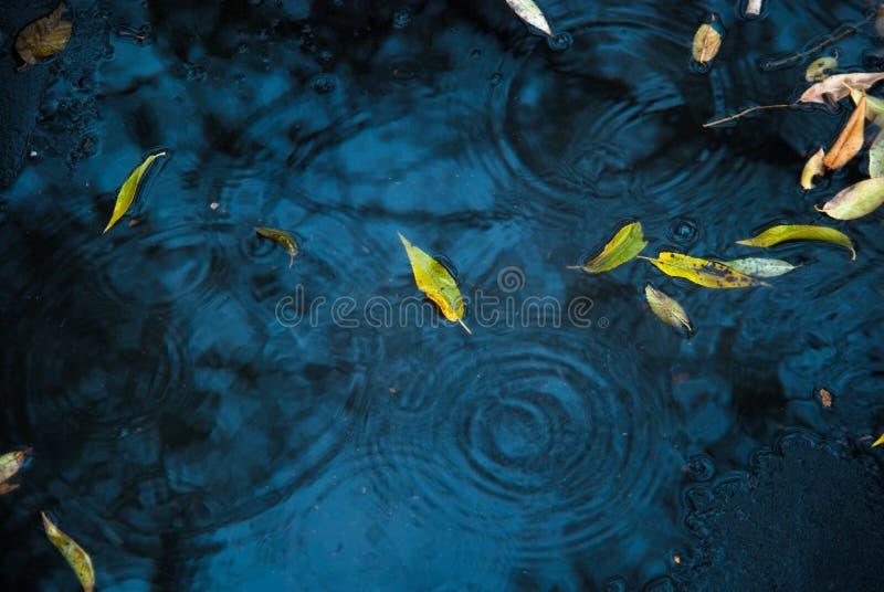 在沥青和水坑的黄色和绿色叶子 免版税库存照片