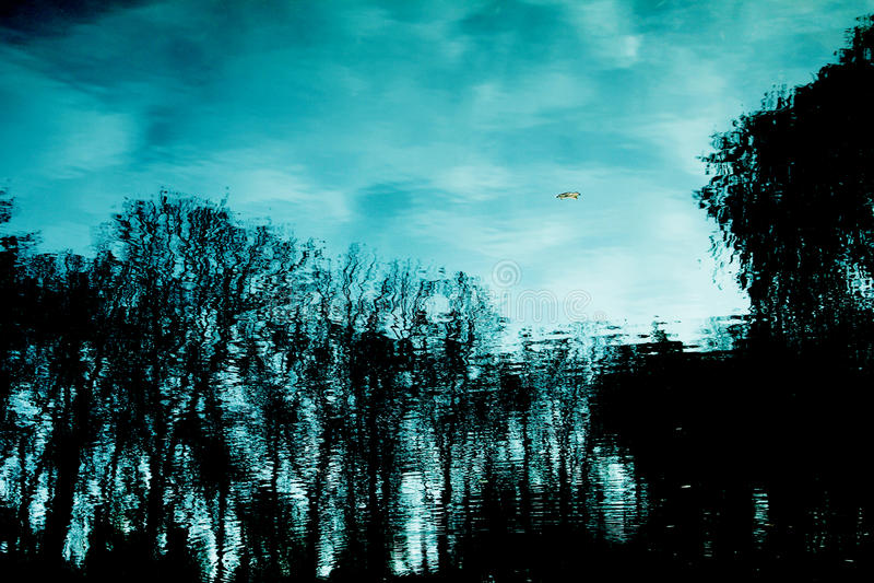 在河反映的树 库存照片