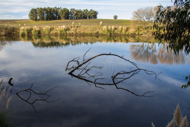 在河岸的树quequen重创 库存照片