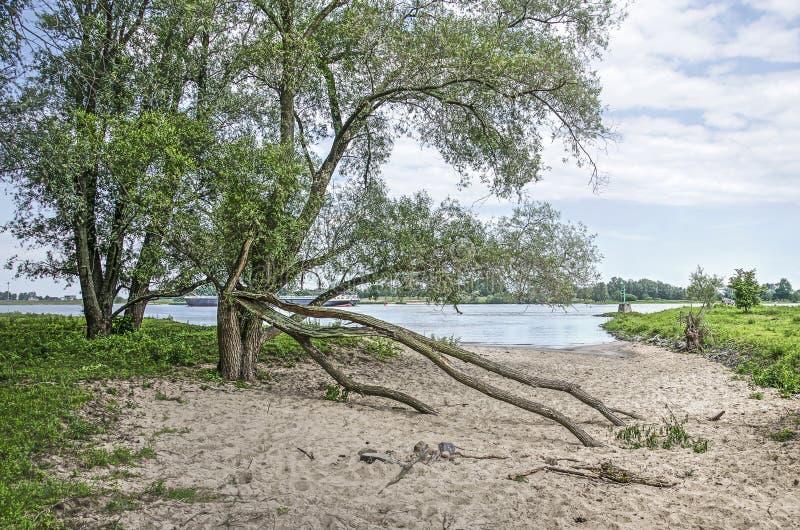 在河海滩的树 免版税库存照片
