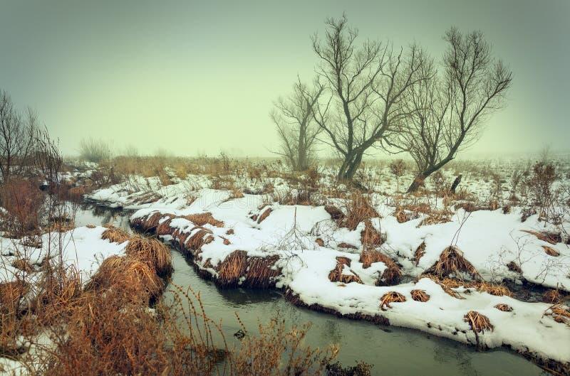 在河的冬天风景绿色雾的 森林 免版税库存照片