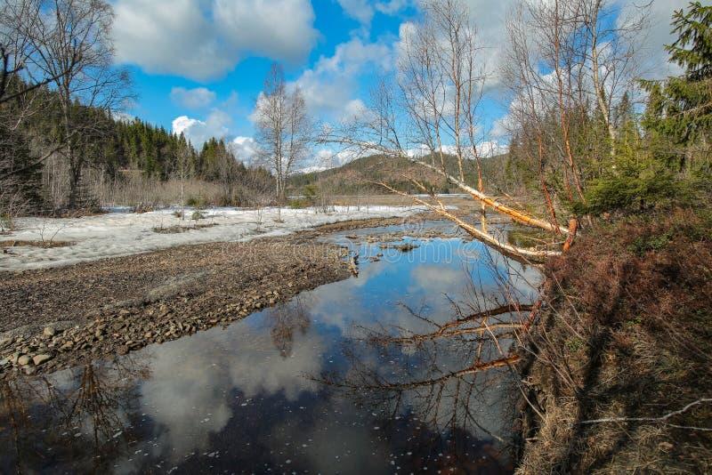 在河的春天 免版税库存图片