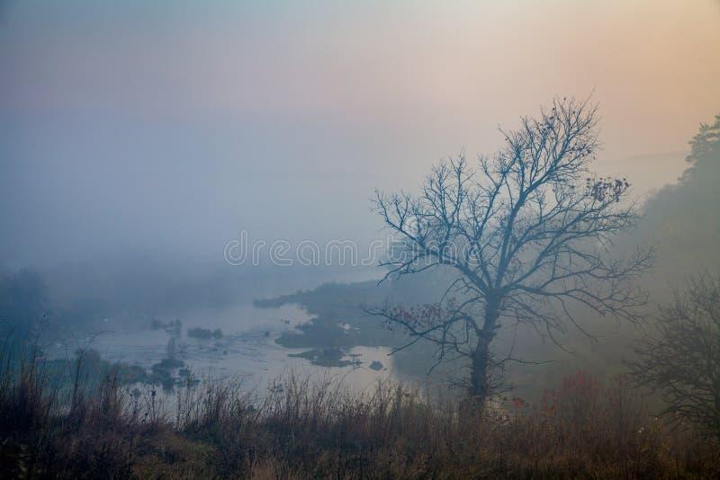在河的有薄雾的早晨 免版税库存图片