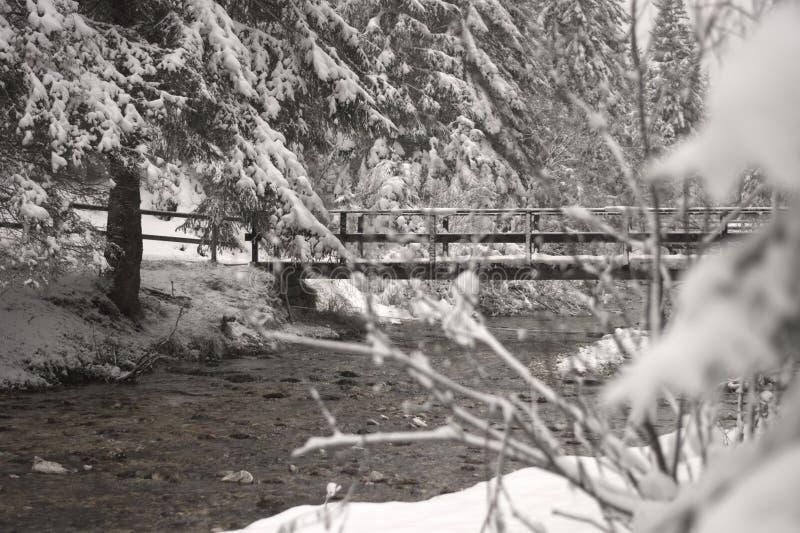在河的桥梁在积雪的森林里 免版税库存图片