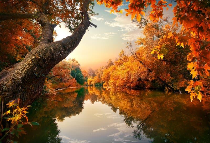 在河的橙色秋天 免版税库存图片