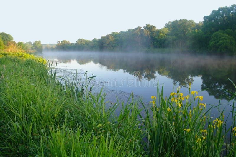 在河的海岸,早晨的木头 库存图片