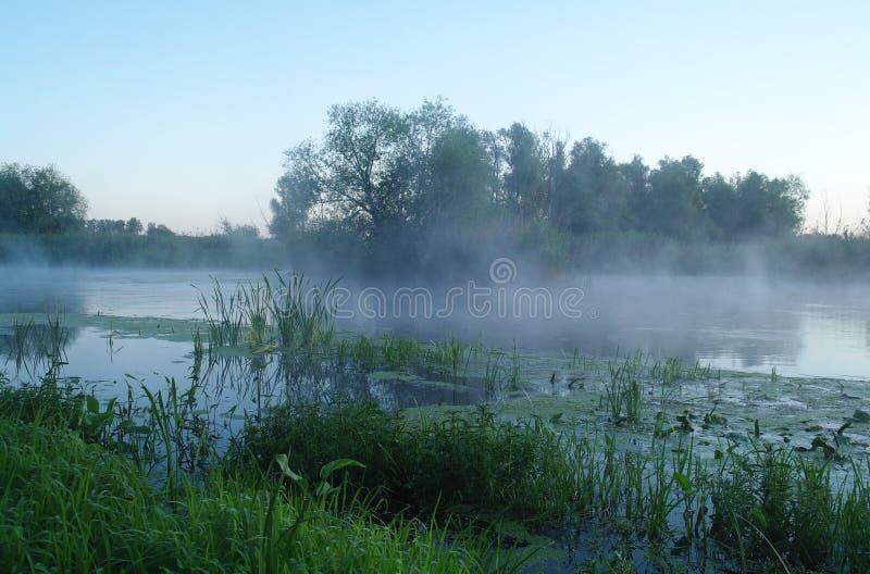 在河的海岸,早晨的木头 免版税库存图片