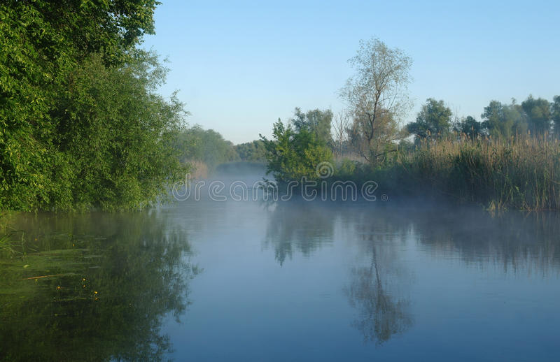 在河的海岸,早晨的木头 免版税库存照片