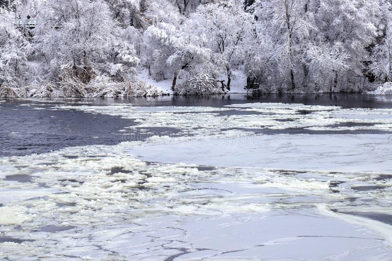 在河的白色冰浮游物用雪和树冰在湖的冬天风景盖的树背景的  免版税库存照片